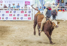 International Mariachi & Charros festival. GUADALAJARA , MEXICO - SEP 01 : Charro Participates in a bull riding Competition at the 23rd International Mariachi & Stock Image