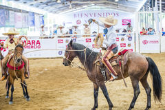 International Mariachi & Charros festival. GUADALAJARA , MEXICO - SEP 01 : Charro Participates in a bull riding Competition at the 23rd International Mariachi & Royalty Free Stock Photography