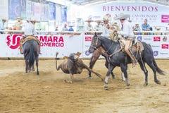 International Mariachi & Charros festival. GUADALAJARA , MEXICO - SEP 01 : Charros participate at the 23rd International Mariachi & Charros festival in royalty free stock photo