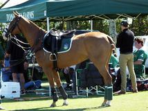 International Polo Club - Wellington, Florida  Stock Photography