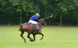 International Polo Tournament Royalty Free Stock Photo