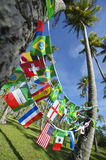 International Team Flags Palm Trees Grove Brazil Royalty Free Stock Photography