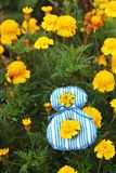 Image of striped figure 8 with marigolds Stock Photography