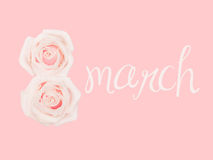 International Women`s Day, march 8, decorated with flower, pink background. International Women`s Day, march 8, pink background Royalty Free Stock Images