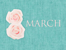 International Women`s Day, march 8, decorated with flower on turquoise background texture. International Women`s Day, march 8, decorated with flower on turquoise Royalty Free Stock Photography
