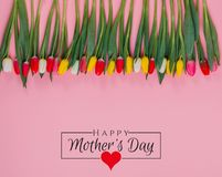 International Women`s Day on 8 March design. Tulips Flowers on background. stock images
