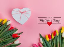 International Women`s Day on 8 March design. Tulips Flowers on background. royalty free stock images