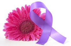 International Women`s Day pink gerbera with symbolic purple ribbon. On white wood table Royalty Free Stock Image