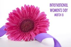 International Women`s Day pink gerbera with symbolic purple ribbon. On white wood table Stock Photos