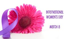 International Women`s Day pink gerbera with symbolic purple ribbon. On white wood table royalty free stock photo