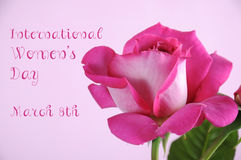International Womens Day pink rose Royalty Free Stock Photo