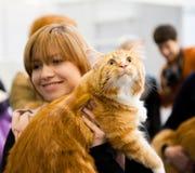 Internationale Ausstellung der Katzen Stockfoto