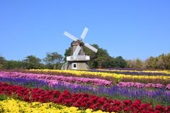 Internationale Chrysanthemen-Ausstellung Pekings Stockbilder