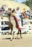 Internationale Kamel-Rennen in der Virginia-Stadt, Nanovolt, US Stockbilder