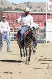 Internationale Kamel-Rennen in der Virginia-Stadt, Nanovolt, US Lizenzfreie Stockfotografie