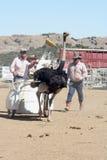 Internationale Kamel-Rennen in der Virginia-Stadt, Nanovolt, US Lizenzfreie Stockfotos