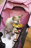 Internationale Katze-Ausstellung Lizenzfreies Stockbild