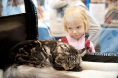 Internationale tentoonstelling van katten Stock Foto