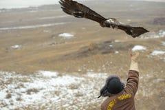 Internationale toernooien van meesters van de jacht met de jacht van vogels Stock Afbeelding