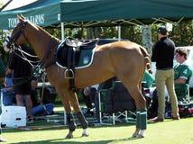 Internationaler Polo Club - Wellington, Florida - Joe stockfotografie