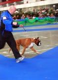 Internationales Hunde- Erscheinen 59° Lizenzfreie Stockbilder