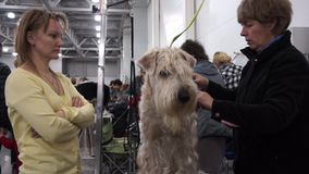 Internationell hundshow CACIB-FCI stock video
