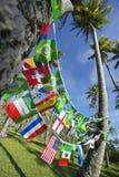 Internationella Team Flags Palm Trees Grove Brasilien Royaltyfri Fotografi