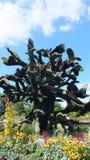 INTERNAZIONALE 2013 di MOSAICULTURES a entrata di Montreal, Quebec, Canada, Montreal: L'albero dell'uccello fotografia stock libera da diritti