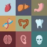 Interne menselijke geplaatste organen vlakke vectorpictogrammen Royalty-vrije Stock Foto
