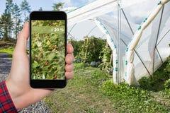 Internet av saker i jordbruk och smart lantbruk arkivbild