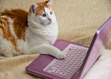 Internet for Cats Royalty Free Stock Images