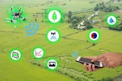 Internet da agricultura thingsindustrial e do conceito de cultivo esperto, móbil do uso do fazendeiro e aplicação ao monitor, con imagem de stock