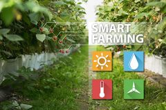 Internet delle cose nella tecnologia di agricoltura e nel concetto d'agricoltura astuto Immagini Stock Libere da Diritti