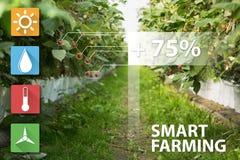 Internet delle cose nella tecnologia di agricoltura e nel concetto d'agricoltura astuto Immagine Stock Libera da Diritti