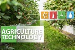 Internet delle cose nella tecnologia di agricoltura e nel concetto d'agricoltura astuto Fotografie Stock