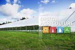 Internet delle cose nella tecnologia di agricoltura e nel concetto d'agricoltura astuto Immagini Stock