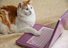 Internet para los gatos Imágenes de archivo libres de regalías