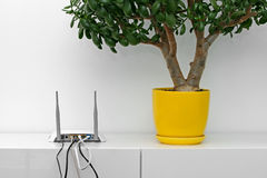 Internet router and flower pot on white shelf. In bright interior stock image