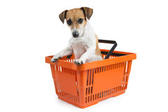 Internet shopping pet Stock Photo
