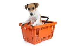 Internet shopping pet Stock Photo