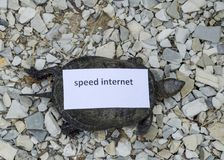 Internet speed. A bad internet symbol. Low download speed. Slow internet. Ordinary river tortoise of temperate latitudes. The tort Royalty Free Stock Photos