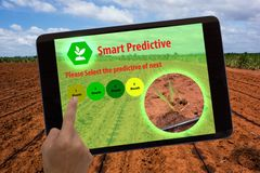 Internet of things agriculture concept,augmented reality,farmer use tablet and ar application to predictive the estimate of field Royalty Free Stock Image