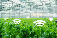 Internet of things in agriculture. Royalty Free Stock Photo