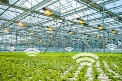 Internet of things in agriculture. Smart greenhouse with wireless control stock photography