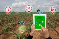 Internet of thingsagriculture concept,smart farming, smart agr. Iculture.The farmer using application in taplet to control and monitor the condition by wireless Stock Photography