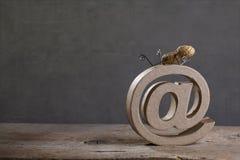 Internetowi arachidy Obraz Stock