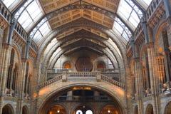 Interno del museo di storia naturale Fotografia Stock