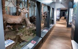 Interno del museo SMOPAJ, Liptovsky Mikulas - Slovacchia Immagini Stock