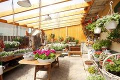 Interno del negozio di fiore Fotografie Stock