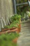 Interno della serra per i fiori e le piante crescenti Mercato da vendere le piante Molte piante in vasi Immagine Stock Libera da Diritti